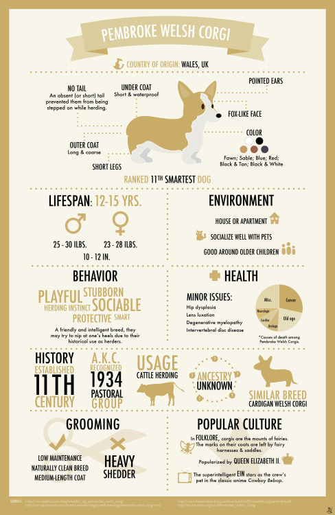 A cute and fun infographic features the lovable Corgi dog.